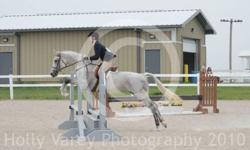 10 yr old 15.2hh fleabitten grey appendix cross mare. Potential to be a trillium level hunter/jumper. Has jumped up to 4feet with ease, w/t/c in a frame, and moves off leg. She has been shown at some local shows, and always does well. She is very well