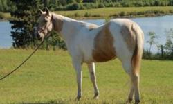 Beautiful palomino paint mare, 4 years old halter broke been saddled really friendly easy to handle, she stands 15'3hh would make an excellent jumper, barrel racer, she's very athletic. Needs time and love. experienced horse persons only!!! More photos on
