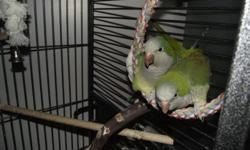 LOOKING FOR A QUICK SALE, THEIR BREEDING SEASON IS ALMOST APON US. Due to my med,problems I can't set them up. They thro Blues & green quakers in each clutch. Small investment with big $$ returns.  They are of prime breeding age            Contact for