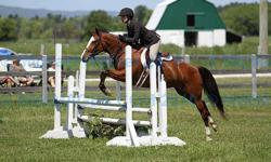 Available at a new stable just minutes outside waterloo with a bright new indoor area and outside sand ring. Trillium/ schooling/or A circuit coaching available. Contact for more information and pricing.