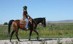 Casey is a 3 year old has his whole life ahead of him.  This Arabian gelding carries the older Egyptian lines, the sensible, tough desert bred Arabians that lived with their families in their tents.  They endured scorching temperatures during the day and