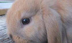 We have some little ones that need caring homes. We have a litter that is now 5 weeks old and is ready to go! We also have ones that are only a couple weeks older. Right now we have a good selection of colour, and they are well socialized. We'll have