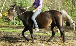 Reg. QH mare for sale. well put together, sire is smokin doc steel. great with other horses, kids, dogs, and sheep. has been started under saddle and is very smart. ties, lunges, good with her feet, easy to mount,and trailers. more pictures and videos