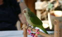 Kiwi is a 2 and a half year old quaker parrot purchased at Exotic Wings and Pet Things in the summer of 2010. Kiwi has been a great companion through the time i have had her, unfortunately i no longer have the time to give her that she deserves. Kiwi has