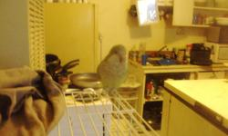 I have a male Quaker parrot with cage for sale. He is quite friendly and talks a lot.