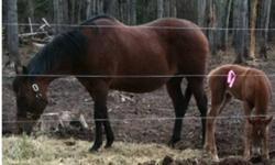 I am taking offers on my 8 yr old sorrel quarter horse cross rides western and english and my 16 yr old bay purebred quarter horse rides western both are trail riding horses and sadly have to sell because my kids have grown up and moved out and now have