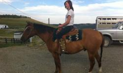 Joe is an 11 year old dun quarter horse gelding. He is has no papers. You can go in many directions with him such as gymkhana, ranch horse, recreation,and trail horse. He has a very fast walk and can trot on a loose rein. I have used him for pulling a
