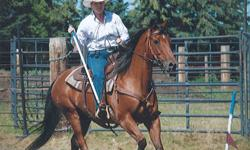 17 year old quarter horse gelding. He is very well broke and a dream to ride. Has competed successfully at team cattle penning and gymkhana. Has also been roped off of and ridden on trails. He loads easily and is very well mannered. Up to date on farrier,