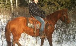 Registered three year old sorrel gelding for sale. He has had about three months of riding and is working awesome. He is good around cattle. He has been to the mountains an has been ridden by a fourteen year old out on the trails by himself. No buck or