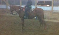 Rosie is a 3 year old, 16.2 tb mare. She is still green undersaddle but very quiet and smart. Goes walk, trot steadily and green at the canter. She is easy to work with, and a pleasure to ride.   Lease terms are flexible. Would consider an out of barn