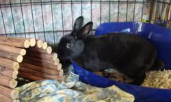I have too many pets and I need to get rid of my rabbit.  Come with cage and accessories.  Please call 403-872-5071. Thank you