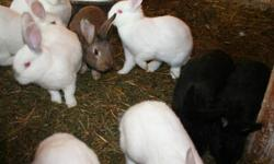 I have 9 -3 month old New Zealand cross ,male rabbits for sale , weigh about 6 lbs should mature to around 9lbs. 2 black,3 white and 4 white with grey nose and ears , coming to Grande Prairie on Monday Jan. 9th and can deliver . Brown one in the picture