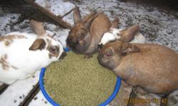 I have 4 very cute and lovable baby bunnies for sale, as well as 4 males that live outside in a pen. Please email if you have any question! This ad was posted with the Kijiji Classifieds app.
