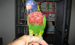 I bought rainbow lore and the cage last week in pet shop for1900$ but must sell due to emergency in my family.Lore was 1000 bucks plus taxes and the cage was 650 plus tax.if you want to buy just rainbow lore I can sell it for 700,or 900 for bird and the