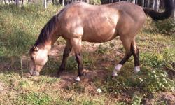 The Bar K Ranch is letting a couple of its yearling registered quarter horses go. For sale is a handsome buckskin, gelding colt, born on April 29th, 2010. He has been handled very little so far but could be halter broken upon request. We are located 30