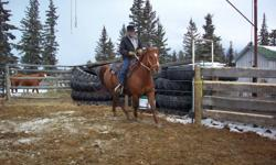 For Sale, 6 yr old AQHA gelding. 15 hands, 1100-1150lbs. Well built, excellent bone, good feet. 120 days riding this year. (60 days Pasture riding in Saskatchewan). Fast walker, smooth ride for long days in the saddle. Goes through water no problem.  Nice