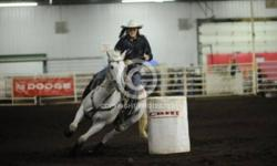 11yr old 15hh built very nice, great looking mare. She's sired by Jag in time a running horse and then cow on the dam side. She is registered! This mare is a SOLID ranch horse, she gives it 100% everytime, she works cattle like a dream very quick and