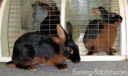 I'm looking for rare rabbit breeds. I'm starting a rabbitry, and I enjoy having breeds that aren't seen often. I'm very responsible and keep all my animals in perfect health all the time.   Right now I have Dutch, Tan, and English Spot (No, Dutch aren't
