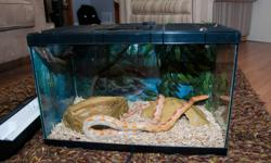Looking for a good home for Flick, a 5 year old, 3 1/2 foot Red Albino Cornsnake.  Comes with a 10 gal. tank with a wire top, under tank heater, shelter, etc.  Please email or call Darrell at 403-251-7713 for more info.