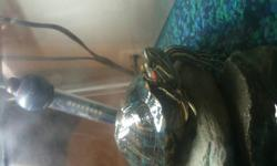 Im selling my 1 year old red eared slider, she is about 1 year old and very healthy. she comes with a tank, lighting, heater food and the stones.   40$ or best offer. must pick up.