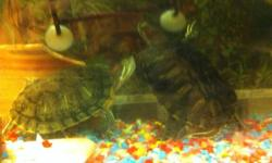 50 gallon tank, two filters, lights, floating island, rocks, water heater, two red eared sliders, food and water conditioner and all accessories looking for $300 firm worth way more. If ad is still up they are still available. This ad was posted with the