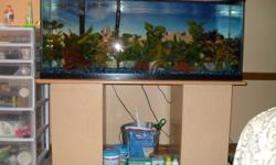 I must sell this fish tank, I reduced my asking price down to $250.00 or best offer. Willing to sell the tank and accessories without fish, fish without the tank, but will not sell individual items.   EVERYTHING INCLUDES: Stand 300 Watt Heater Double