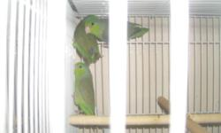 Hobby Breeder Offering Fantastic Selection of : Bonded Breeding Pairs Of Pacific Parrotlets $ 130 Healthy Young Parrotlets 3 Pairs to choose from:   1 Pair Of Green - is 6 months 2 Pair of Blue and Green: One pair is Female - Green and Male - Powder