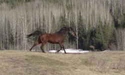 I had the wrong # but have since corrected it ,I am listing this for a friend, she has a well gorgeous papered arab mare,  her regigstered name is, DCT ROMAR VALIDI ROZE canadian horse registry  # is 0040615-  this mare is 12 yrs old about 14.3, she was