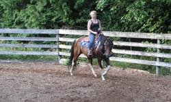 reg 11 yr old paint mare 14.2 hds   good on trails ,  ridden mostly western , some english  . needs a confident rider  not a beginner  mount   trailers well , good with the  farrier,  good ground manners
