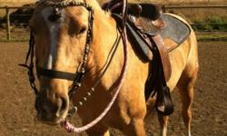 Beautiful mare. Very people friendly and good ground manners. She use to run barrels, and was a 4-h horse. But shes been standing all summer because ive been working up north and have no time at all. Good with grooming, bathing, and trimming. Email or
