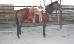 Well broke registered Quarter Horse Bay Mare, 10 years old, 15.3 HH. Belle has done tonnes of ranch work.  She is very cowy and has the speed if needed. Safe for any level of rider. $3500.00