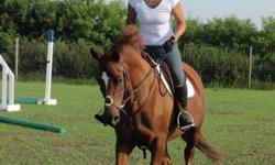 AFRICA a 6 year old KWPN-NA registered mare with exceptional showjumping pedigree. She's sound, well mannered and LOVES to jump! She's a lot of horse so requires an experienced rider. Serious inquiries only, please. Video and more pictures on web page: