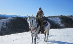 13 year old registered paint gelding. Used for 4H, trail riding, and cattle work. Needs experienced rider. Please call Sarah