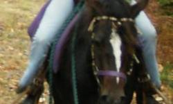 Lovely, well minded girl. she is very smart, catches on to anything you throw her way. very nicely put together. she is good in the ring, great on trails, and quiet on the road. she is going to be a great all around mare! i have more pictures and video if