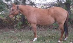 Jazz is a 2008 grand-daughter of the legendary Doll's Union Jac. She is a stocky built filly with a strong dun factor and tiger striping on all four legs. She had 3 months of training last fall and was doing great before giving her a break for winter. She