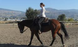 Deck Bars Charge Registered Bay Quarter Horse Gelding Five years old Athletic conformation Flashy face Sire is Skip To My Lucky successfully showing in cutting (Doc O' Lena background) Has worked cattle Was shown numerous times in his three year old year,