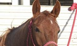 """""""Kody"""" is a yearling red roan gelding. He's bred to work and rope a cow! Sire is Spoonful of Freckle, going to Peptoboonsmal, and Freckles Playboy. The dam is Peppy San Badger, and Doc's Jack Sprat. All this is ON this guys papers. He's halter broke,"""