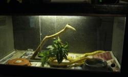 Reptile enclosure Sliding Plexi doors Built in light. 2 heat pads Approx 4' x 2' x 2' Doesn't include snakes in the picture.