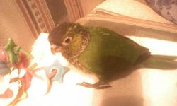 she is a black capped conure that we miss so much. we will give $500.00 with no questions asked for her return, please call or email us at 403-346-0544 thanks so much   We raised her from baby on and we miss her dearly  we just can not stop looking for