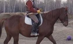Serenity Farm offers PRIVATE (1-1)  riding lessons for Beginner and Intermediate Riders Ages 4 to  60. Learn to ride with awareness and a solid position. Insured and Certified: English, Dressage, Jumping, Western Pleasure, Western Equitation and Trail. on