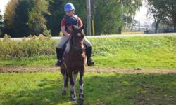 Maggie is a 14.1 paint mare. She is well schooled walk, trot, canter and over a course. She is easy to ride and easy to handle on the ground. A complete sweet heart! She has been used in lessons for beginner riders, but it also a challange for the more