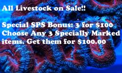 We have Frags but we also have over 350 coral colonies to choose from. Soft or Hard Coral, Rare or Common Species. Every one of our in stock Coral is like getting 15-45 frags....but you won't have to wait for the visual impact and they cost far less than