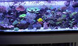 Crazy 4 Coral We're obsessed with water Quality! Accepting Debit and Credit Crazy 4 Coral is having another Crazy Sale! More then 35 Corals for $25 and under. Acans $25 and under (over 25 heads per colony) Alveopora $20 (8 to choose From) Candy Canes $25