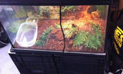 """Hi, I have a baby Savannah Monitor lizard up for sale. It is about 11"""" long and will grow to about 3 or 4 feet. Excellent eater, and is eating crickets, earthworms and pinkies at the moment. Comes with the cage the tank is 20 gallon if u like email me or"""