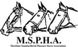 MSPHA currently have 3 great geldings available, all with potential as saddle horses, and all located in Truro. Each horse is unique in their own way, and are looking for their new homes, hopefully before the snow flies.  Pleaes reply to this ad for more