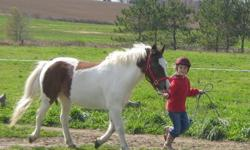 Texas is a 14 yr old small paint pony looking for young rider who wants to learn and gain confidence. We are located in a beautiful facility in Bright, 20 minutes from Kitchener. He loves to play western games, go for hacks and he can jump a small course