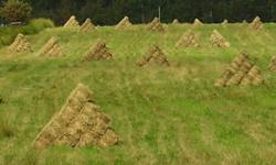 Like lots of others, a bumper crop of hay this summer.  Bales are small squares, and contain broam grass with a mix of alfalfa (seeded 90% broam 10% alfalfa) and are for horse feed, cattle feed, llama feed, elk feed, good for goats, and you can make a