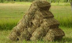 Bales are small squares, and contain broam grass with a mix of alfalfa (seeded 90% broam 10% alfalfa) and are for horse feed, cattle feed, llama feed, elk feed, good for goats, and you can make a fort out of them for when your in-laws come to visit!  This