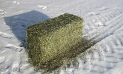 We have for sale 3 different types of Hay in small square bales.   All types are Brome with a little Alfalfa mixed in.  Horses love it!  The 3 types we have are:   1)  No Rain, nice fine bright Green bales weighing in around 65-70 lbs.  Awesome for