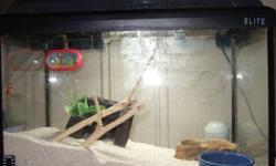 Hello! I am offering a full hermit crab set with 2 hermit crabs.     They come with everything you need to take care of hermit crabs. (2 hermit crabs, aquarium with lights, hiding place, 2 climbing branches, sand, 3 dishes, thermometer, humidifier,